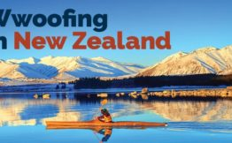 Wwoofing in New Zealand